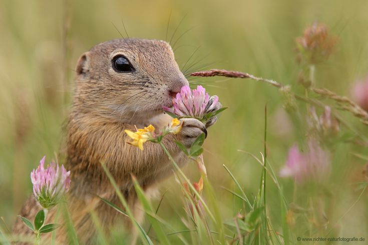 It's nice to stop and smell the flowers every once in awhile... | photo by Oliver Richter
