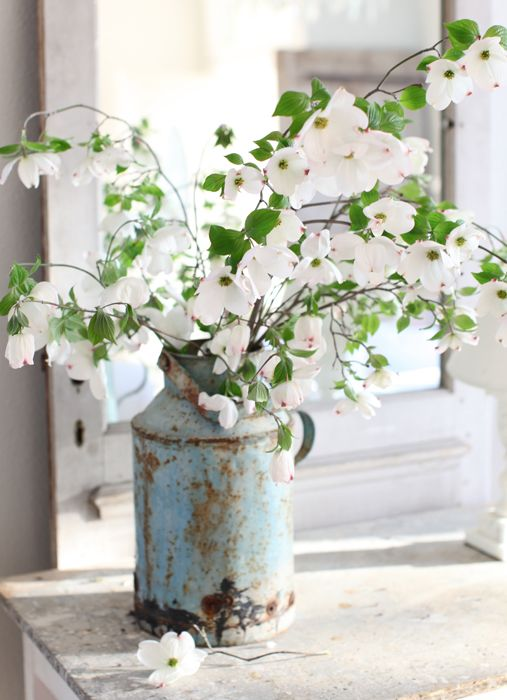 White Dogwood branches in French milk jug, rustic centerpiece #weddingcenterpieces #centerpieces #receptionflowers