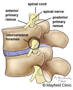 Spine Anatomy, Anatomy of the Human Spine