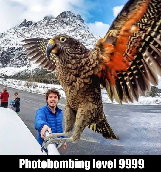 What a photo bomb!