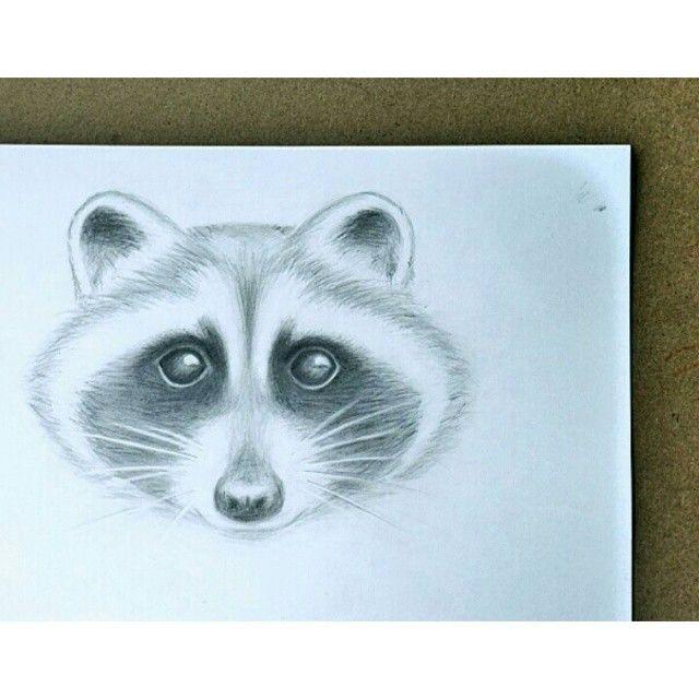 @alice_inmadness енот raccoon
