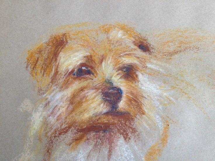 Yentl1, Oil pastel on paper - A3 size. Norfolk terrier. Dog portrait