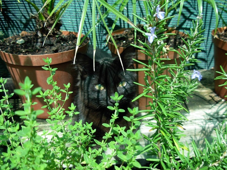 Kitty in the herbs