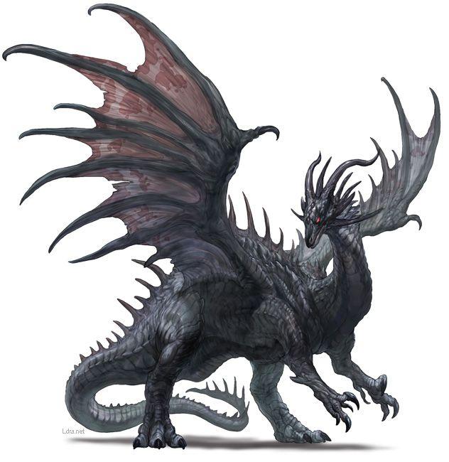 ブラックドラゴン                                                                                                                                                      もっと見る