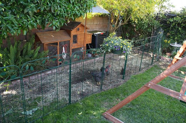 Inexpensive Easy To Install The New Chicken Fence