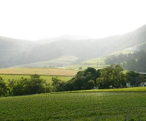Vineyards at Groot Constantia, Cape Town
