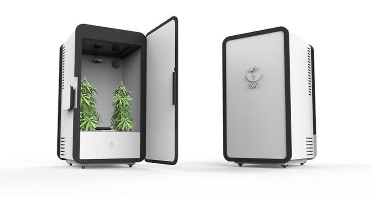 Este aparato cultiva marihuana en tu casa de manera automática