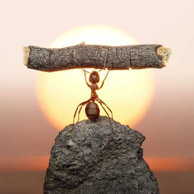 Пессимист видит трудности при каждой возможности; оптимист в каждой трудности видит возможности.  Уинстон Черчилль, английский политик