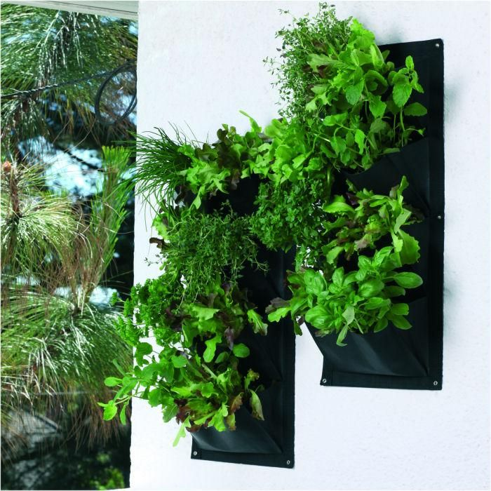 living wall herb garden, placed lower down on a wall for wheelchair access.