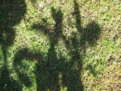ART Shadow TracingShadows Tracing, Summer Art, Art Shadows, Kids Activities, Teaching Art, Art Ideas, Elementary Art, Art Teaching, Art Projects