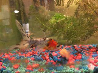 Gerald Saul: new fish