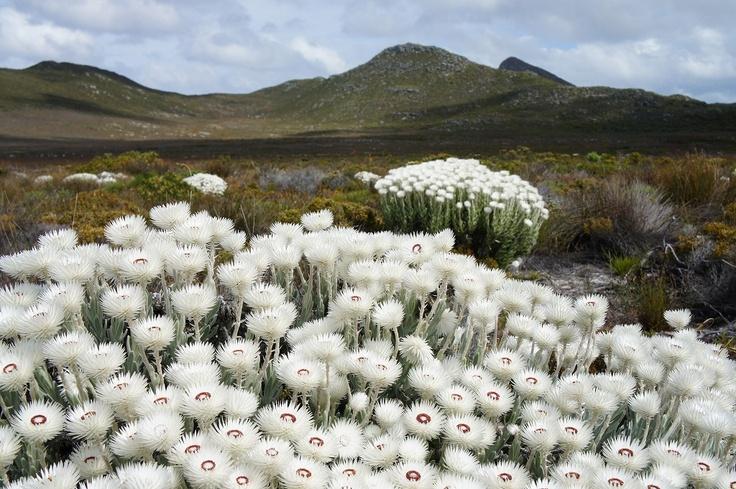Cape of Good Hope、喜望峰! ~南アフリカ~