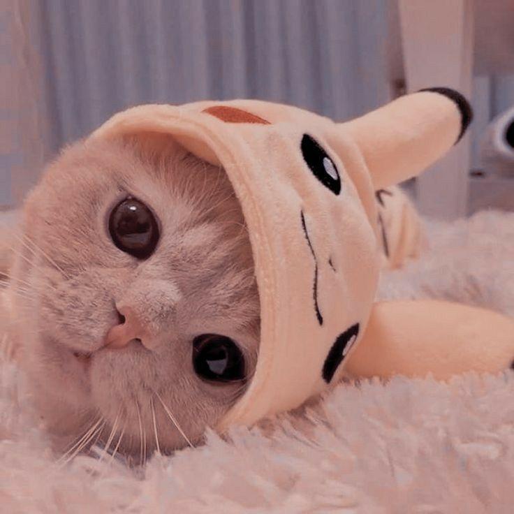 خـ لفـيا ت ف ـخ ـمــه Anak Kucing Menggemaskan Anak Kucing Gemas Fotografi Hewan