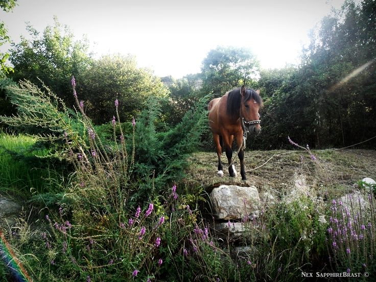 Horse. Nex SapphireBrast | Photography ©