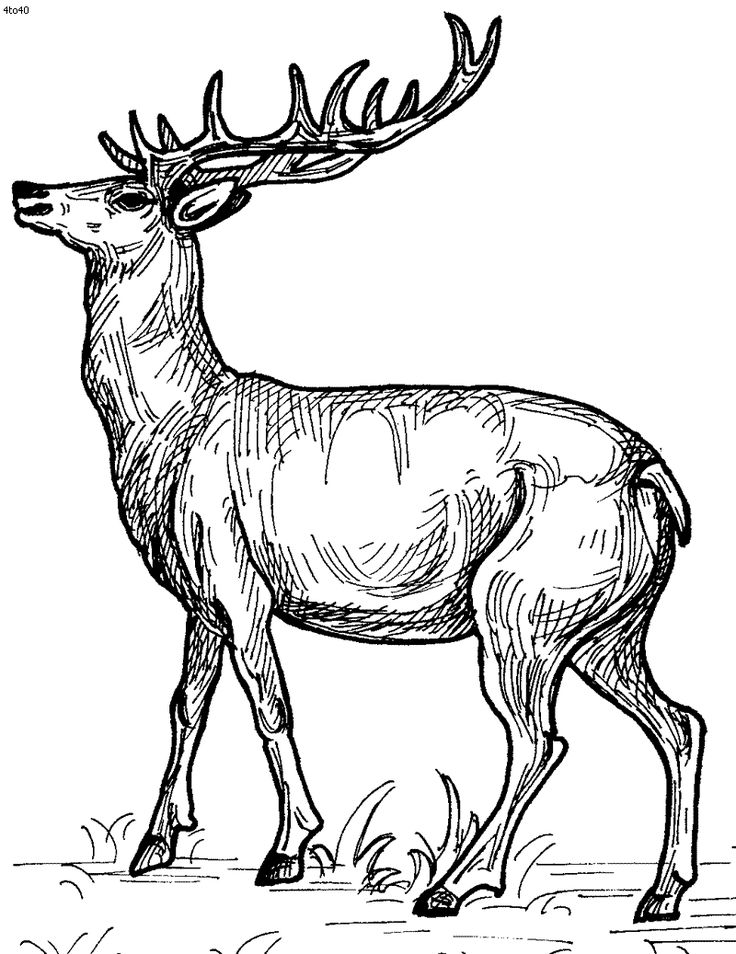 Printable Coloring Book Pictures Of Animals : 240 best color: animals images on pinterest