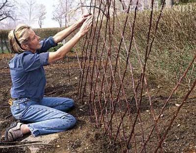 Процесс сооружения шпалеры из прутьев