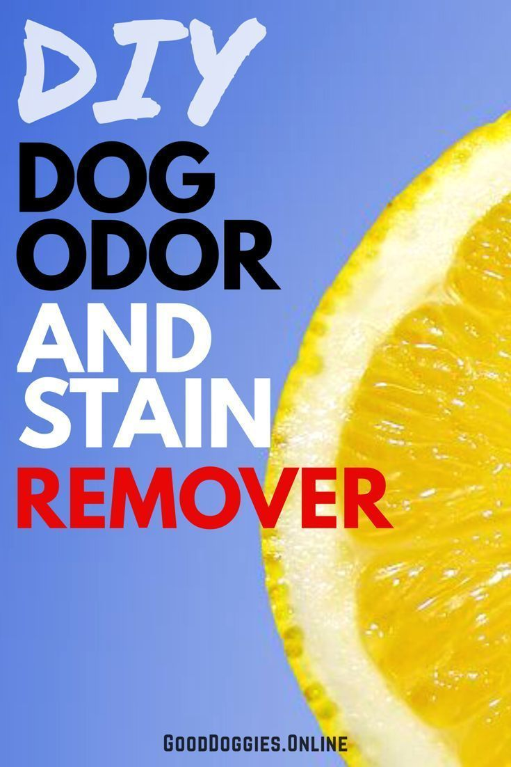 Best 25 Pet Stain Removers Ideas On Pinterest Dog Urine
