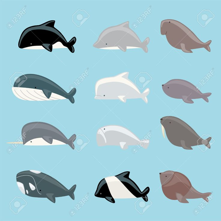 narwhal walrus sea lion blue whale vector illustration stock vector from the largest library of royalty free images only at shutterstock awesome office table top view shutterstock id