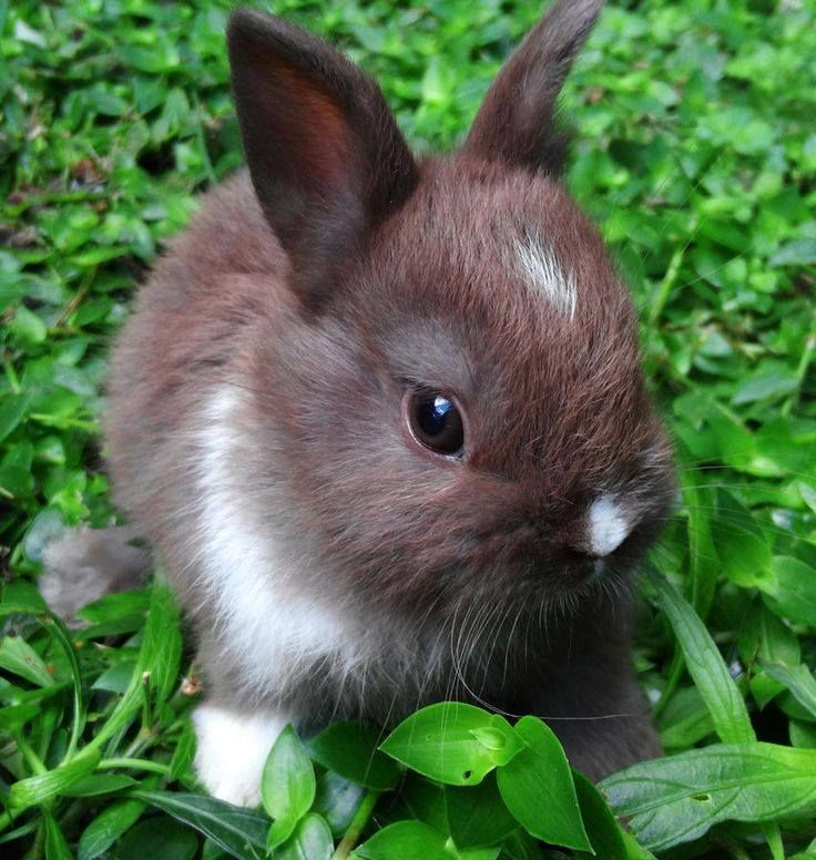 OMG! What a sweet baby bunny!