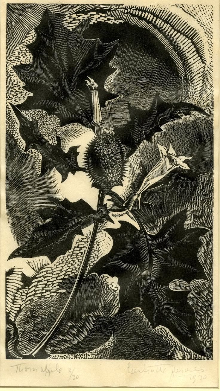 Gertrude Hermes, Thorn apple. 1930. Wood engraving. England. Powerful hallucinogen - Datura stramonium or Jimsonweed, nightshade family.