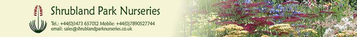 UK Mail Order Nursery, Buy Plants Online, Exotic and Conservatory Plants, Succulents, Hardy Perennials, Shrubs, Climbers, Ferns, Ornamental Grasses and Bedding Plants. Shrubland Park Nurseries, Elmsett, Ipswich, Suffolk, IP7 6LZ