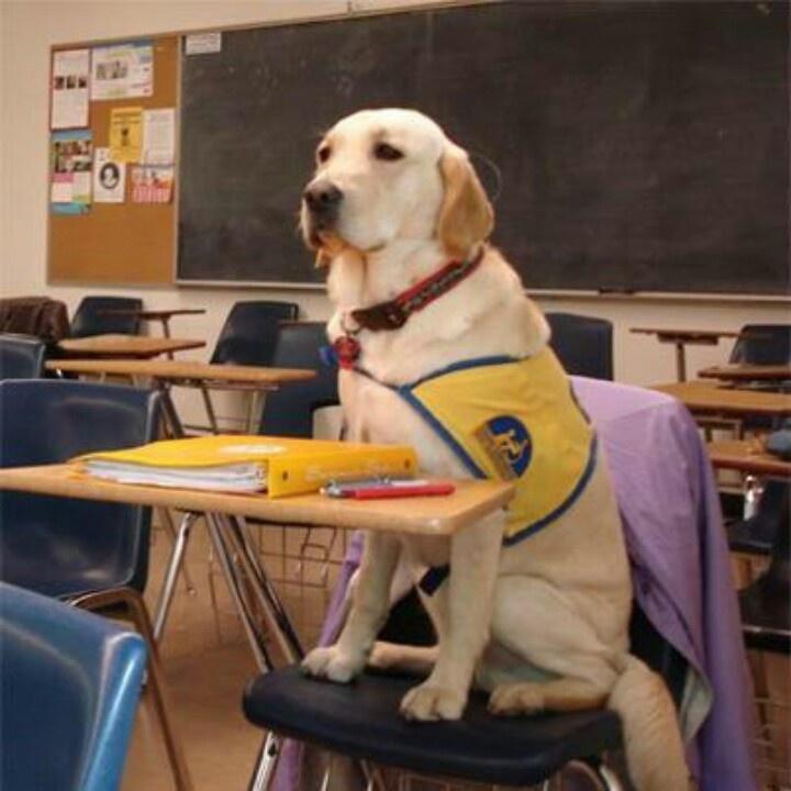 Teachers Pet Dog Training