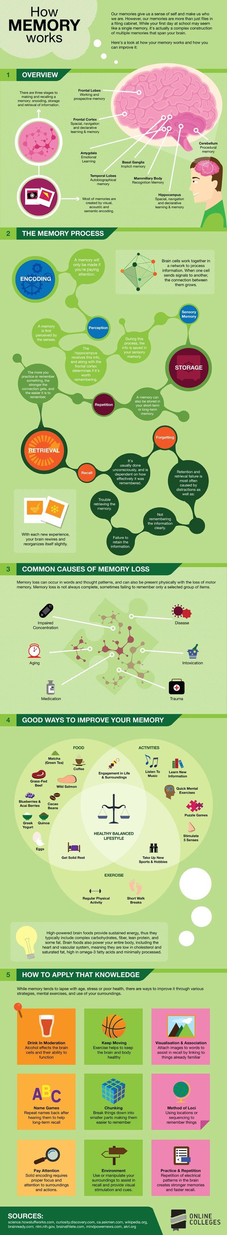 How Memory Works - a very helpful infographic - definitely gives you some ideas on how to tweak your study plan given how the brain works! #SAT #ACT #learn #study #test #teach #college