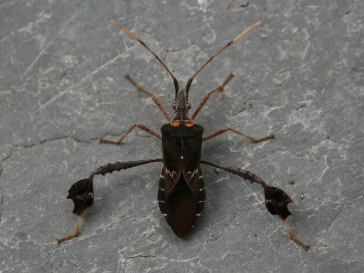 139 Best Creepy Crawlies Images On Pinterest  Beetles Awesome Small Jumping Bugs In Bathroom Review
