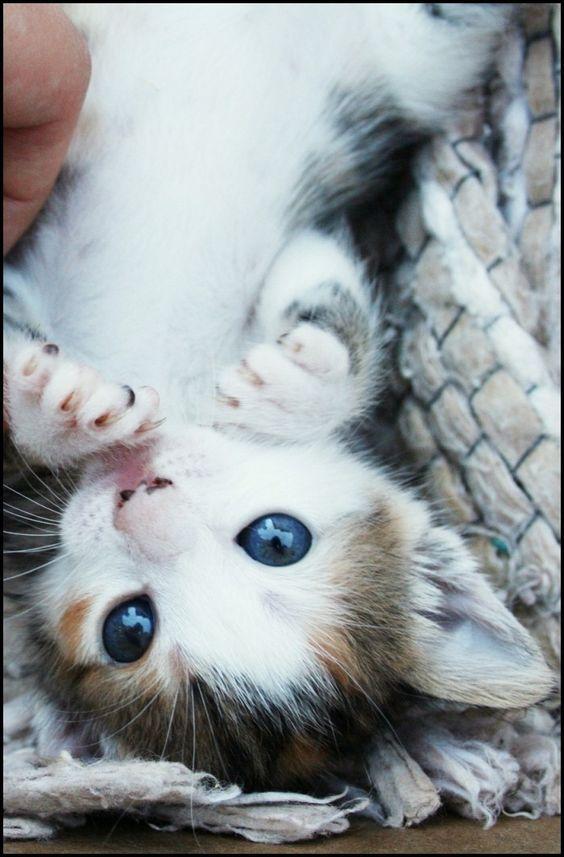 Картинки с самыми милыми котятами в мире с призраками