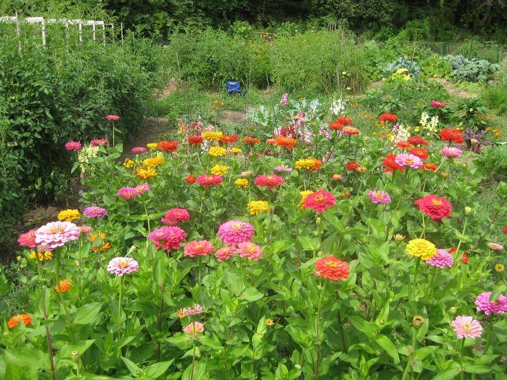 Roses In Garden: State Fair Zinnias - Google Search
