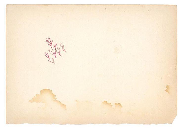 PAINTINGS : DEVENDRA BANHART ART