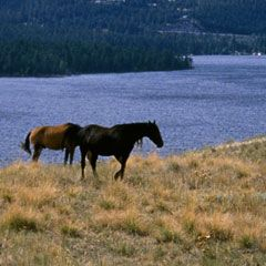 Montana State Parks :: Wild Horse Island-Salish-Kootenai Indians used this island in the middle of Flathead Lake to pasture horses so they wouldn't be stolen by other tribes.