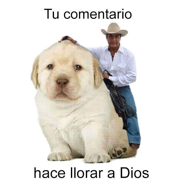 Pin De Sadhid Palacios En Random Memes Perros Memes Divertidos Perros Tristes