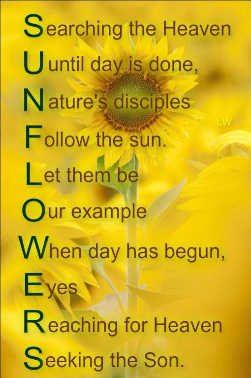 Sunflowers Quote Sunflower Quotes Sunflower Pictures