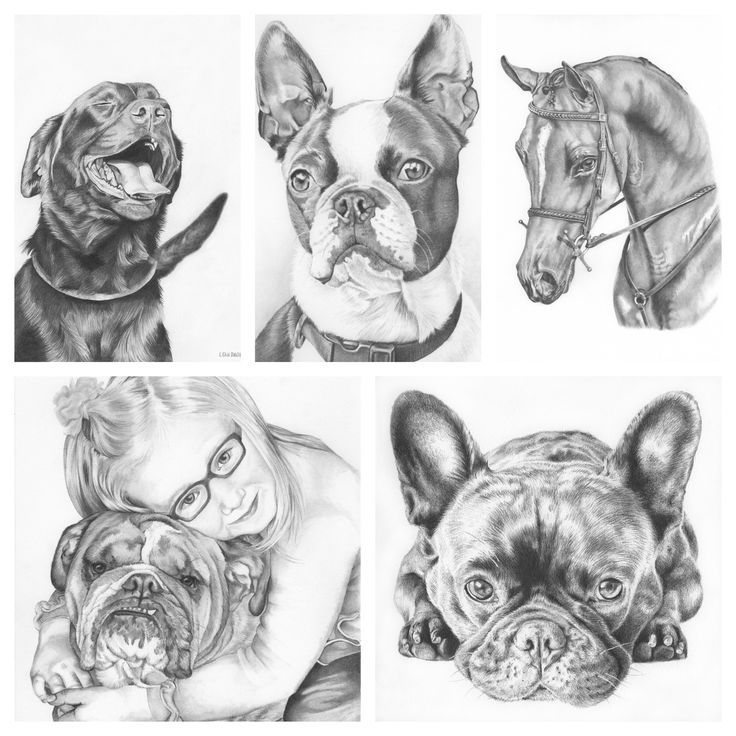 Custom pet portraits make unique and treasured gifts. Interested in grabbing one of the last spots for a custom drawing due for the holidays? Simply follow the link and let's chat! Portraits make a very special and treasured gift. #petportrait #graphite #drawing