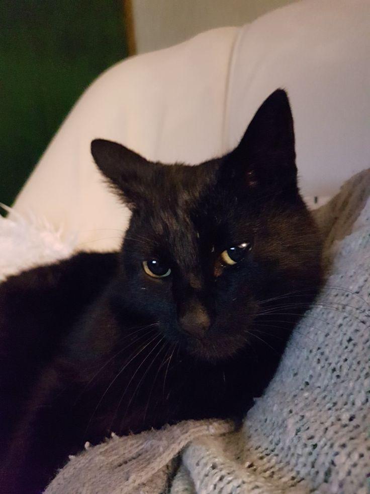 Black cat, Norris