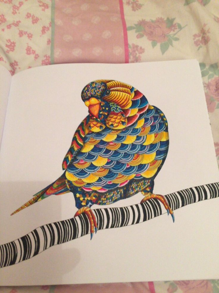 My Completed Budgie From Millie Marotta Animal Kingdom Colouring Book
