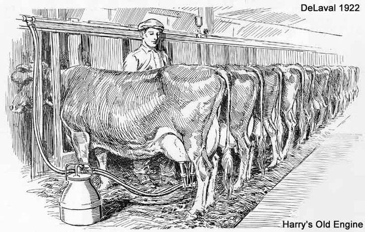 Vintage Cow Drawing | De Laval Separator Company
