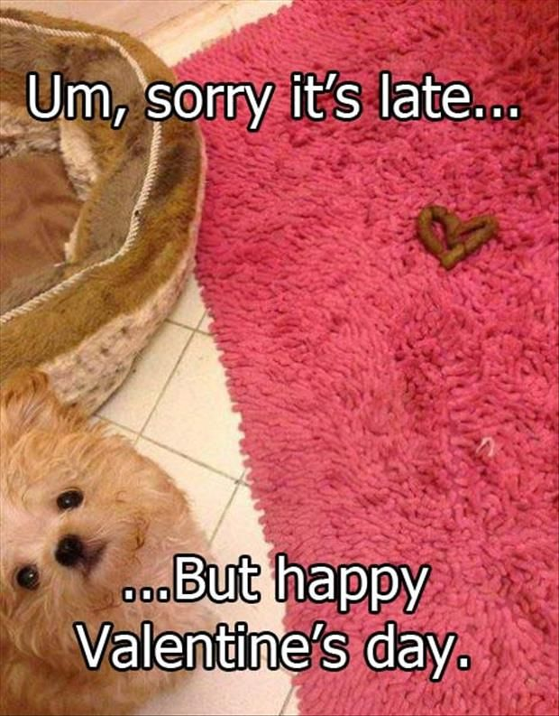 Funny Animal Pictures Of The Day - 18 Pics