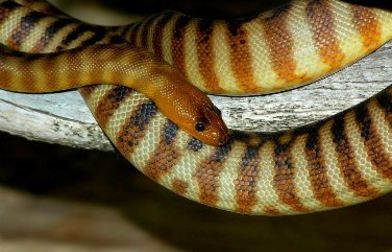 Naturaliste Reptile Park - 10 Wildwood Road, Carbunup River, 08 9755 1771.  Open Tuesday to Sunday 10am - 4pm (last entry 3.30pm