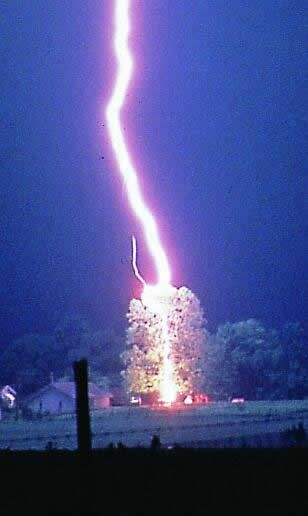 lightning strikes a tree, notice the leader on the left side of the main lightning bolt.
