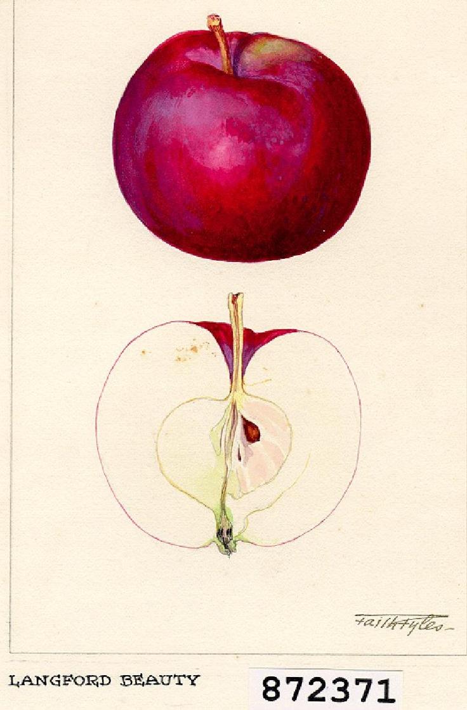 Mangez plus de fruits et légumes!  Peinture d'une pomme par Faith Fyles, 1921 pour le Ministère de l'Agriculture