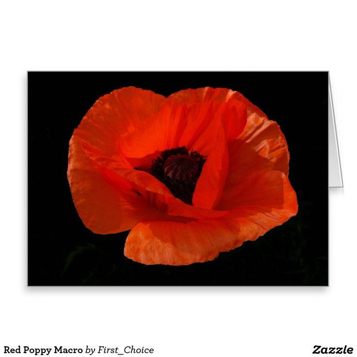 Red Poppy Macro Greeting Card