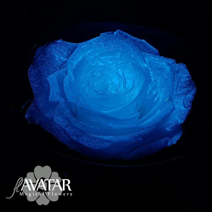 flAVATAR preserve rose glow in the dark - blue effect