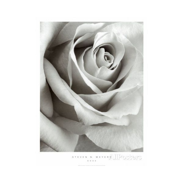 Rose ($33) ❤ liked on Polyvore featuring home, home decor, wall art, rose home decor and framing posters