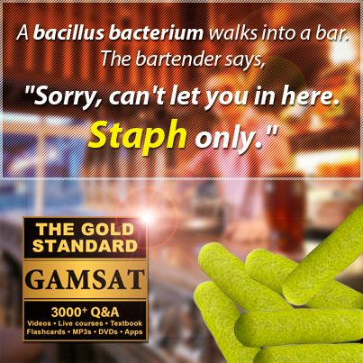 """A bacillus bacterium walks into a bar. The bartender says """"Sorry, can't let you in here. Staph only."""""""