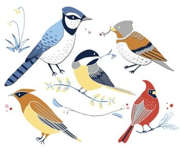 The cute and stylish Winter Birds clip art set contains 17 clip art images, including:+ 5 birds: a cardinal, bluejay, brambling, chickadee and waxwing+ 3 greenery branches+ 1 snowdrop plant+ 8 little berries to spruce up the other art piecesWatermarks and drop shadows are part of the image preview only.Each clipart image is in png file format and saved at 300 dpi.Perfect for: winter crafts, cute birdwatching guides, environment and habitat materials, flash cards, etc.Enjoy!Erin @ Trinket…