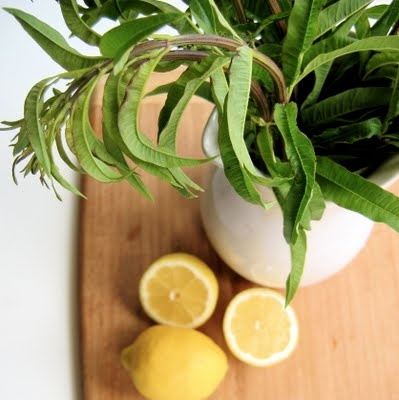 ... Lemon Verbena icecream | ice cream and popsicles | Pinterest | Lemon