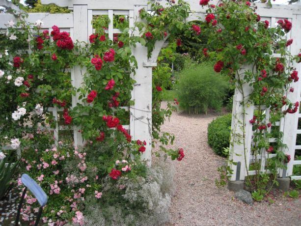 Skulle vara fint med något liknande i vår trädgård! Funderar på om det inte skulle vara fint att skapa en egen avdelning mot Svens hus eller vid odlingarna med hjälp av en vit spalje och rosor?