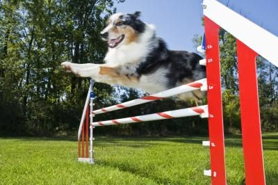 Agility is a fun activity that you and your dog can do together, and it gets you both out in the fresh air and gives you plenty of exercise.